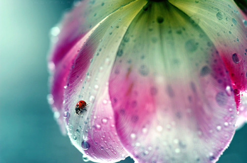 Ladybug on beautiful flower.