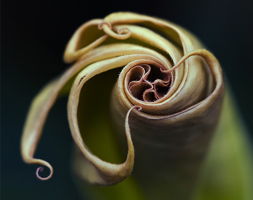 Spiral plant life.