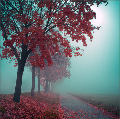 Autumn trees in mist.